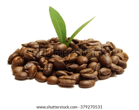 Coffee tree         - stock photo