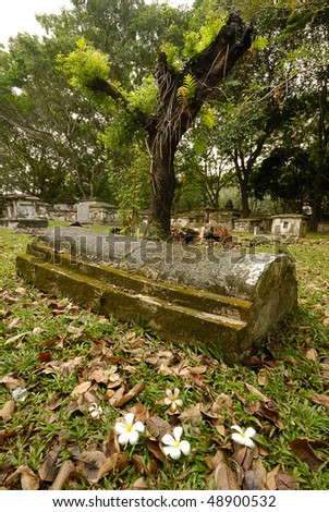 coffin at grave yard with a tree - stock photo