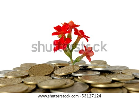Coins and flower, isolated on white background - stock photo