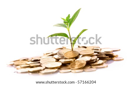 Coins and green plant isolated on white (Ukraininan coins) - stock photo