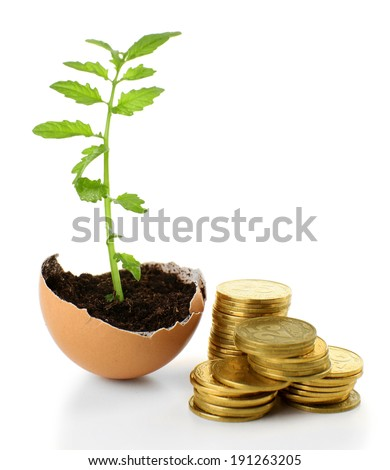 Coins and plant in eggshell isolated on white - stock photo