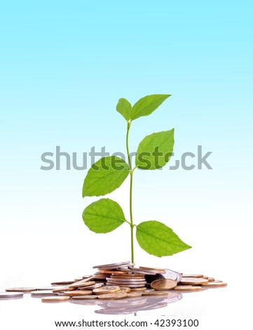 Coins and plant, isolated on blue background