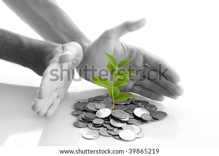 Coins and plant isolated on white background - stock photo