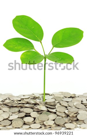 coins and plant, money concept