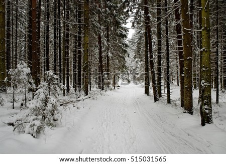 cold and showy winter forest road