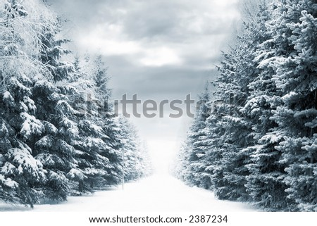 Cold and snowy winter road with blue evergreens and grey clouded skies. Copy space in the center-top and center-bottom.