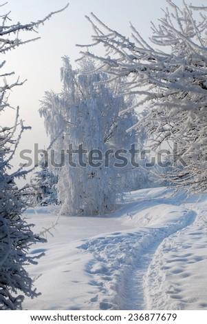 Cold and sunny winter day. Trees covered with hoarfrost. Path in the snow. Beautiful and frosty winter. - stock photo