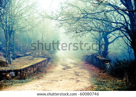 Cold autumn days are bringing beautiful colors, mysterious fog and some spooky moods - stock photo