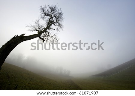 Cold autumn morning with fog over the landscape and lonely tree.