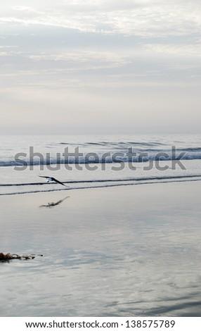 Cold Beach - stock photo