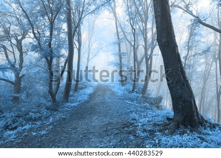 Cold blue leaves of a dreamlike foggy forest