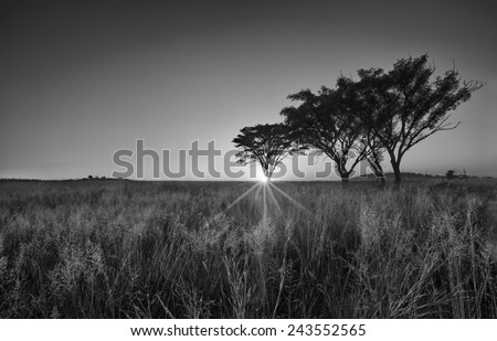 Cold cloudless morning sunrise with trees, grass and fog artistic conversion - stock photo