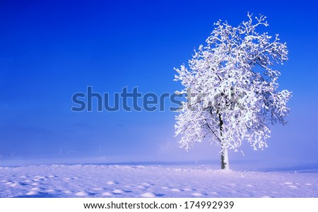 Cold, foggy winter morning with lonely tree in the field. - stock photo