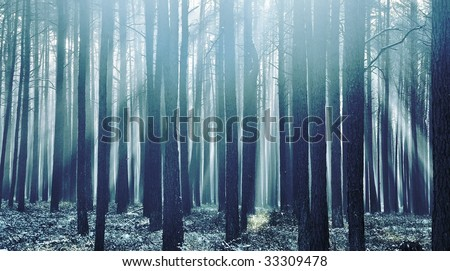 Cold fresh forest in the morning with sunbeams - stock photo