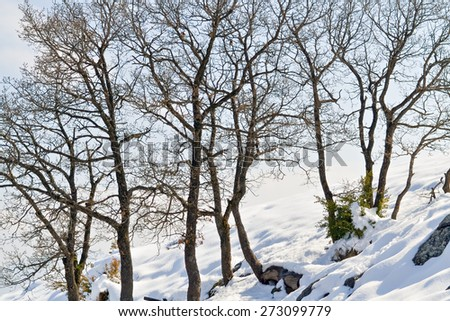 Cold gloomy winter day and deciduous trees in the mountain - stock photo