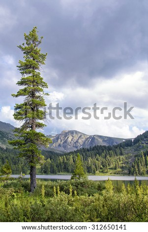 Cold Summer Mountain Landscape with Tall Fir Tree and Tarn