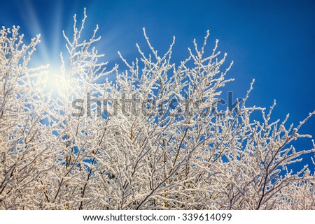 Cold sunny Christmas morning. Northern Forest in snow. Snow-covered trees glisten in the bright sun - stock photo