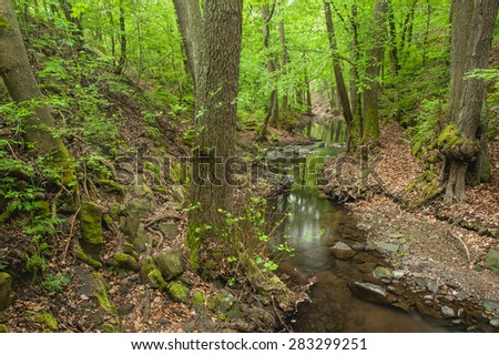 Cold water forest creek gurgle in the river bed of green forest - stock photo