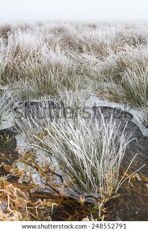 Cold Winter landscape of wetlands with mist and hoar frost in Holland - stock photo