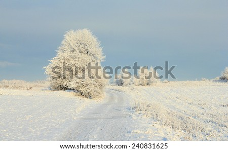 Cold winter landscape with frosty trees and rural road - stock photo