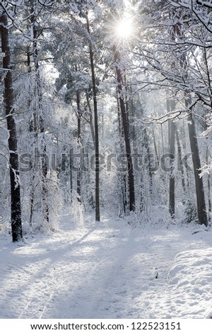 cold winter scenery in the late sunlight