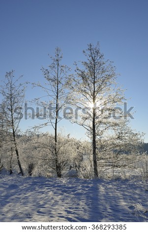 Cold winter with snow. - stock photo