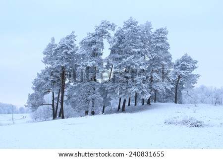 Cold winter with snowy trees in a park - stock photo