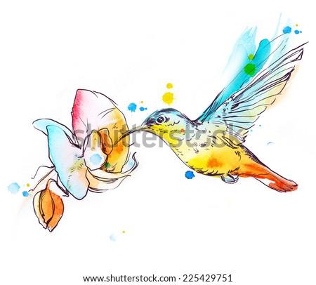 Colibri  - stock photo