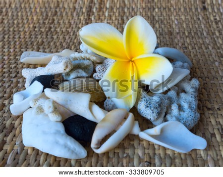 Collage by frangipani flower and white seashells - stock photo