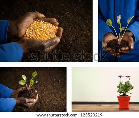 Collage combination African American Farmer Holding Seeds in Hands and gardening plant garden images - stock photo