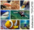 Collage composed of pictures from Red Sea. Marine life concept. - stock photo