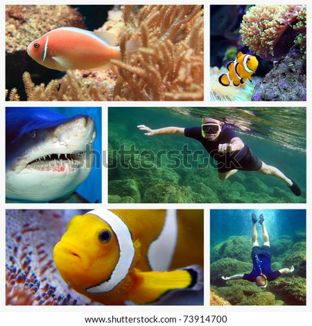 Collage composed of pictures from Red Sea. Marine life concept.