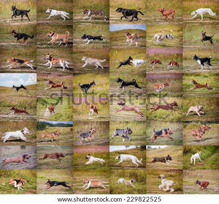 Collage dogs running - stock photo