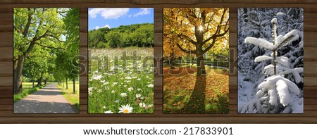 Collage - four seasons on wooden board background. spring alley, marguerite meadow, beech tree back lighted, snow covered fir tree. - stock photo