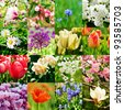collage from  different kind of spring flowers - stock photo