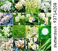 collage from  different kind of white flowers - stock photo