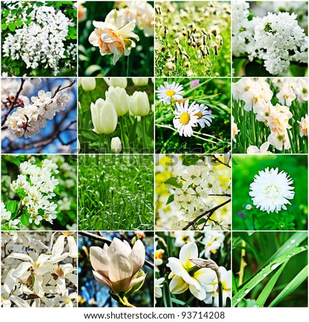 collage from  different kind of white flowers