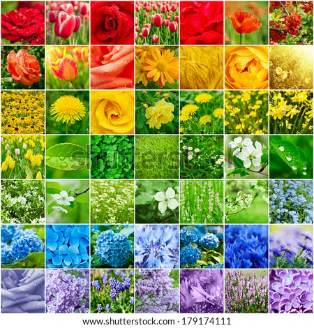 Collage from many images of different colorful flowers - stock photo