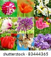 collage from nine image with different kind of flowers - stock photo