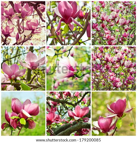 Collage from nine magnolia spring flower images - stock photo