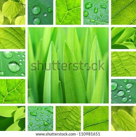 Collage from photos of green plant and leaves with rain droplets