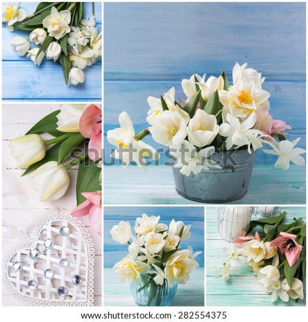 Collage from photos  with bright white daffodils and tulips  flowers on  wooden planks against blue wall. Selective focus.  - stock photo