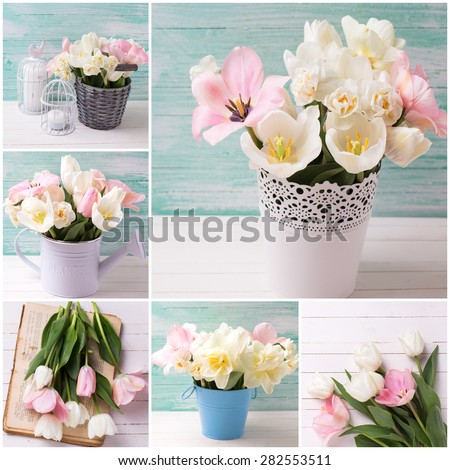Collage from  photos with  spring white narcissus and pink tulips   on white painted wooden background against turquoise wall. Selective focus.  - stock photo
