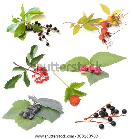 collage from raspberries,black currant ,Strawberries ,Prunus padus, Rose hips, sambucus  isolated on white background
