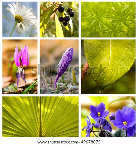 collage from several image; floral beautiful - stock photo