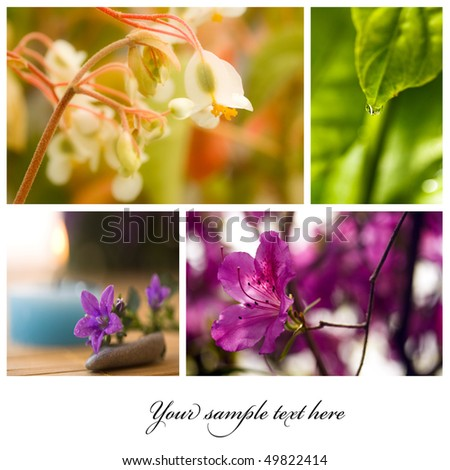 collage from several image; floral beautiful