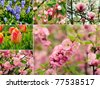 Collage from six images with spring flowers - stock photo