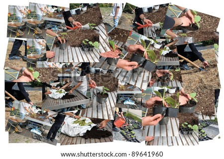 collage, gardener to work inside the greenhouse for plants. - stock photo