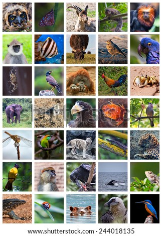 Collage made of set including 35 different animals - stock photo