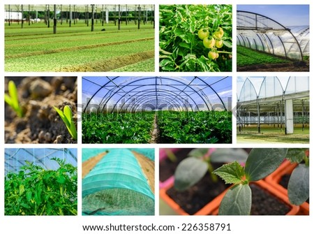 collage mosaic mix of  farming and gardening in greenhouse - stock photo